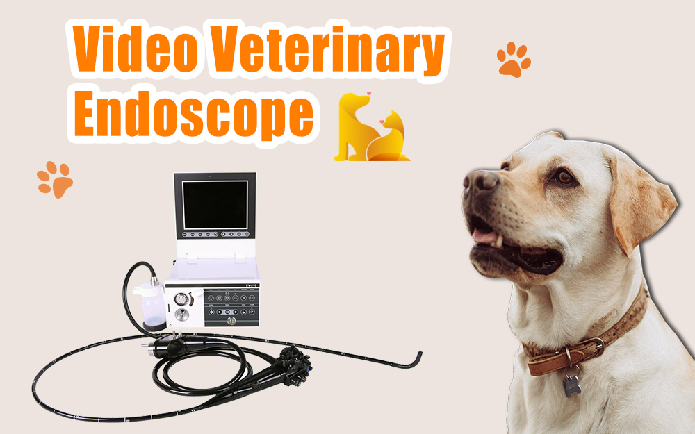 VideoVeterinary Endoscope On Sale